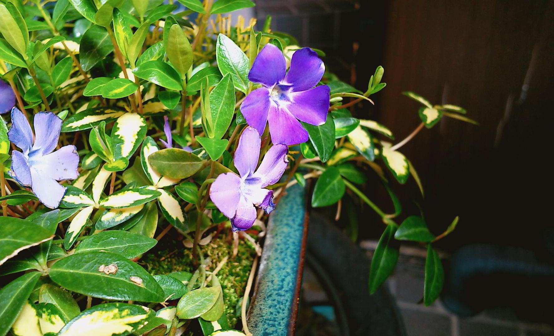 http://www.tomihiro.co.jp/blog/2020/03/23/IMG_20200323_100602131.jpg